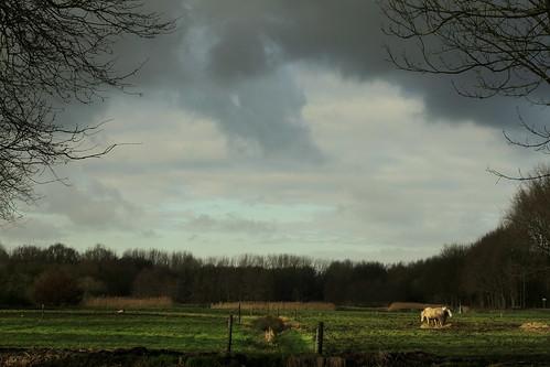 trees shadow horses sun bomen rotterdam bos schaduw zon darksky paarden dreigendelucht