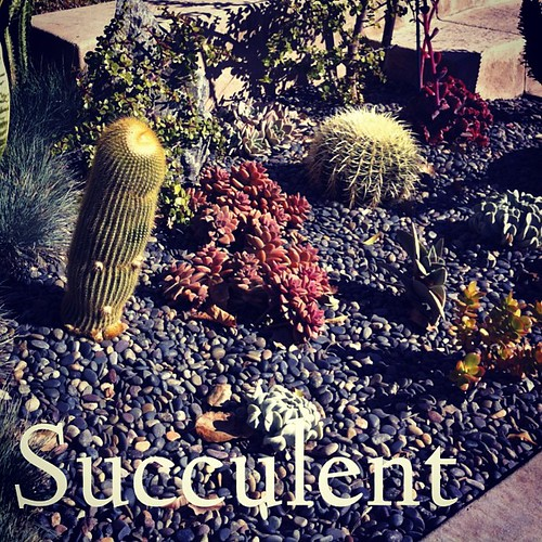 Garden Alphabet: Succulent