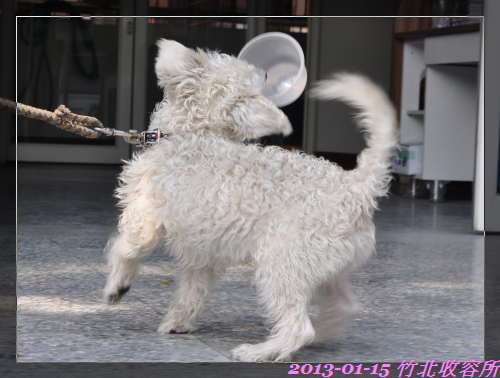 親人小白狗 (3)