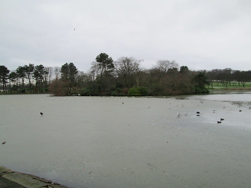 Beveridge Park pond in January.