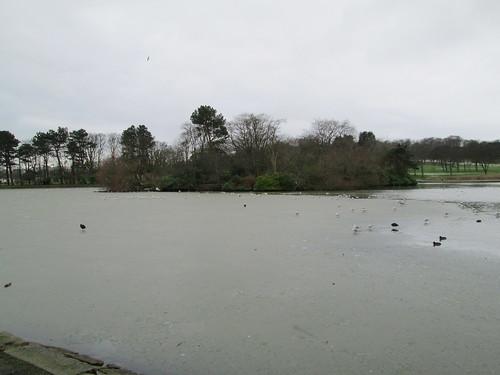 Beveridge Park pond in January.