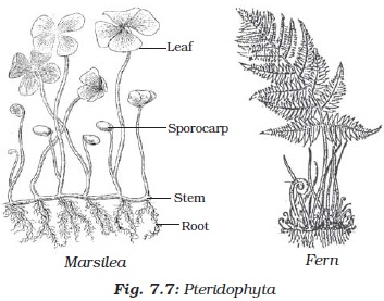 NCERT Class IX Science Chapter 7 Diversity in Living Organisms