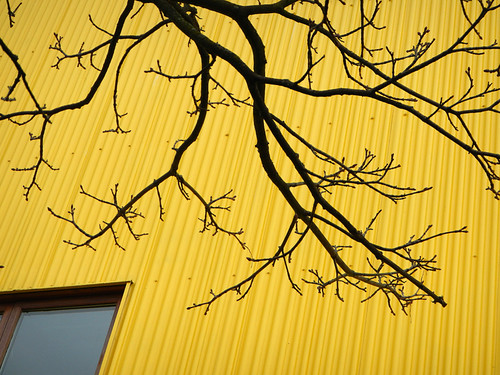 Black Branches Against a Yellow Wall