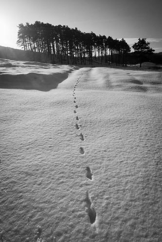 林に向かう動物の足あと