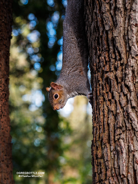 Squirrel hanging from a tree