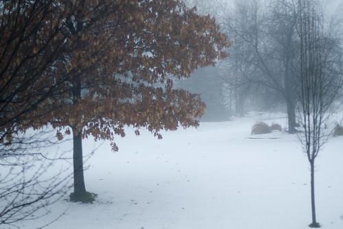 snow-2859