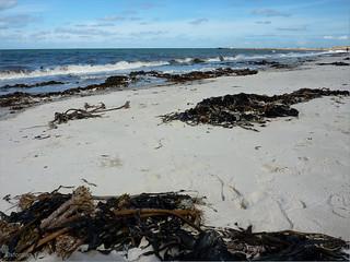 תמונה של Nordstrand. beach water strand island wasser insel northsea nordsee helgoland heligoland hochseeinsel 201008 germansea oxfordiankissuth