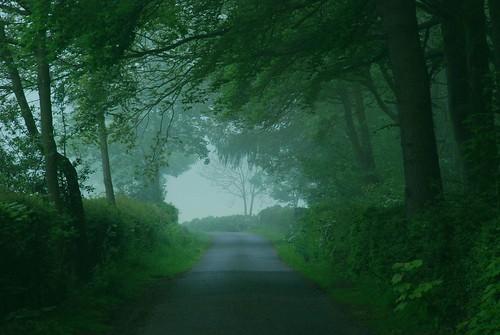 uk trees england mist nature landscape spring nikon scenery northamptonshire 2012 d80 geddington