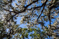 [フリー画像素材] 自然風景, 樹木 ID:201302162000