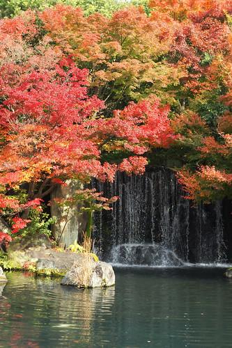 japan autumnleaves 紅葉 好古園 兵庫県 姫路