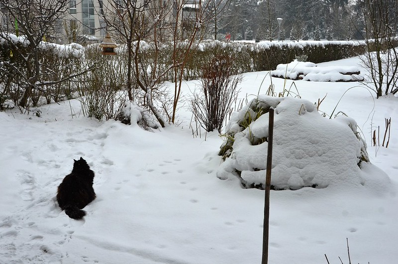 Nera in the snow