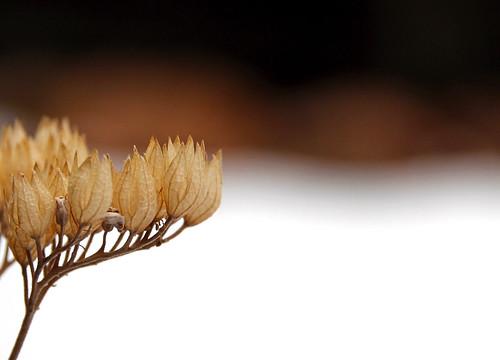 La Posada - Winter Foliage