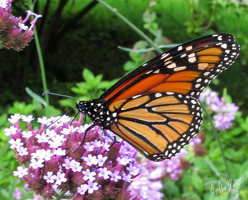 canon butterfly florida g11 coth5 mygearandme photographyforrecreation