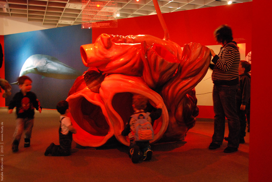 Heart of the Blue Whale