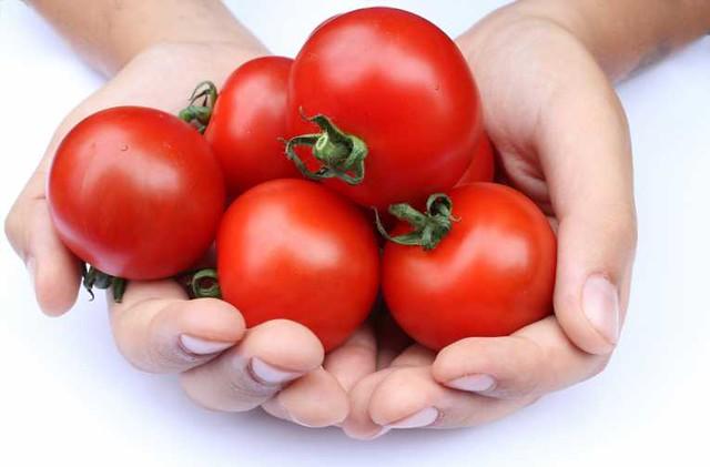 tomates-diarioecologia