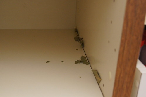 Reorganising The Pantry and Getting Rid Of Pantry Moths Planning
