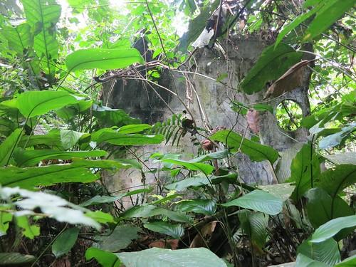 crash overgrown with bonobo food