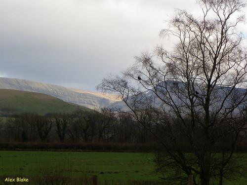 mountain tree wales landscape breconbeaconsnationalpark redkitefeedingcentre