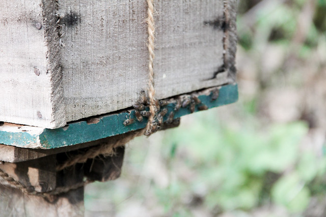 bee (1 of 1)