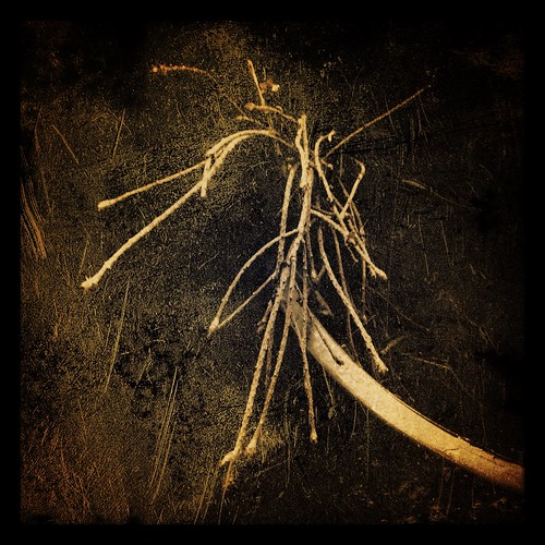 kindling by Nature Morte