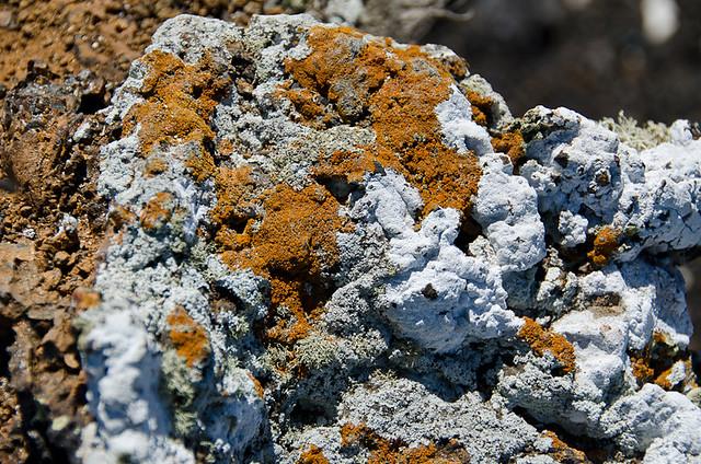 Galapagos Plants: Lichen