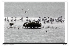 Taijiang National Park