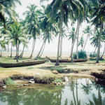 kerala_backwater_boats_palms