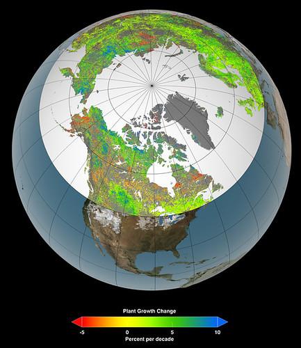 Riscaldamento globale ed effetto serra: aumento della vegetazione nelle zone artiche