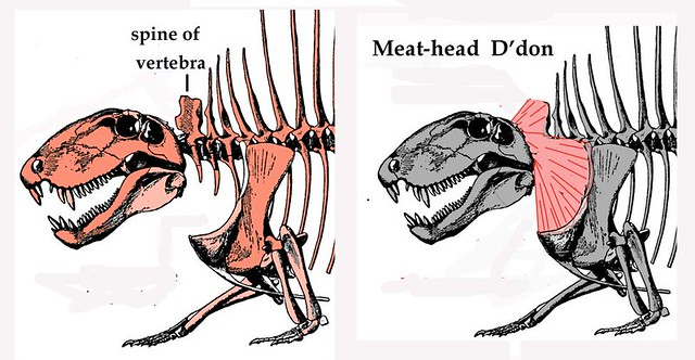 Murder by hickey: Dr. Bob explores another side of Dimetrodon-on-Dimetrodon violence in the latest Bakker blog