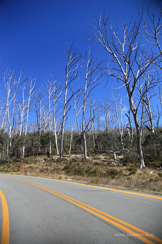 road wood trees sky tree nature rural forest landscape countryside nationalpark country australia nsw newsouthwales bitumen snowymountains kosciuszko kosciuszkonationalpark asphelt snowymountainshighway
