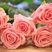 Spring Roses - Day 319/365 by Olivia L'Estrange-Bell