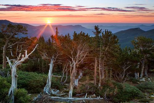 morning blue trees summer favorite foothills mountains green clouds forest sunrise flora colorado unitedstates evergreen sunburst rockymountains bristleconepines mountevanswilderness