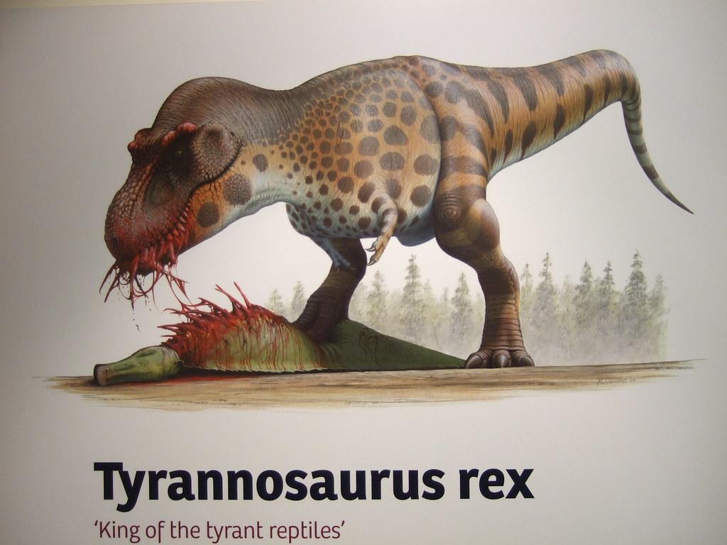 Robert Nicholls, T-rex