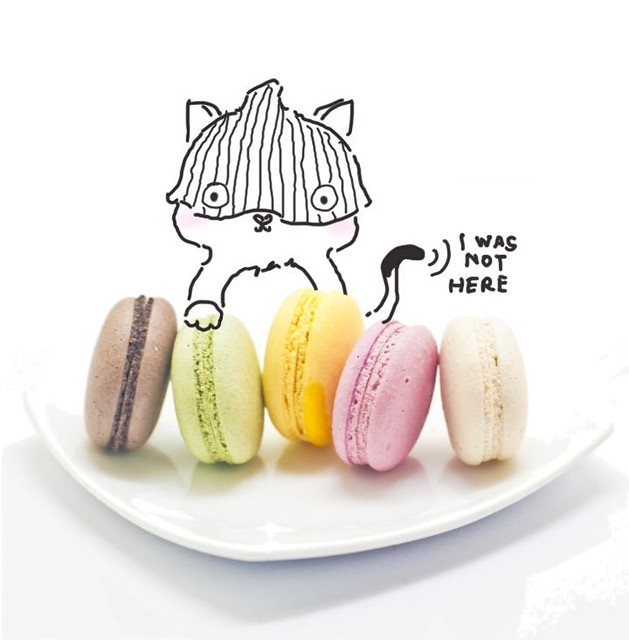 Fat Cat Steals my Macaroons