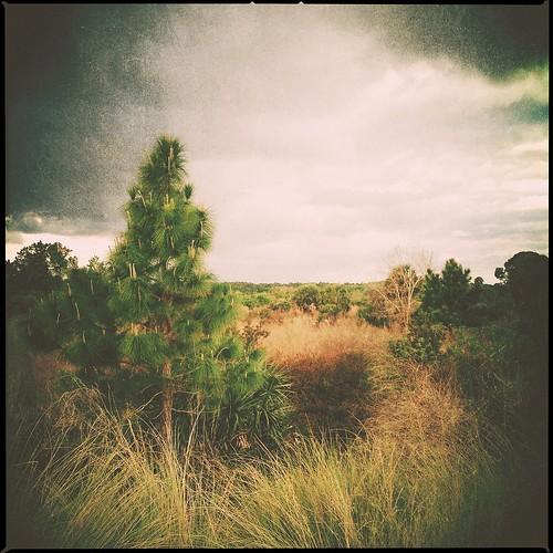 blender kitcam filterstorm irisphotosuite iphone4s simplybw
