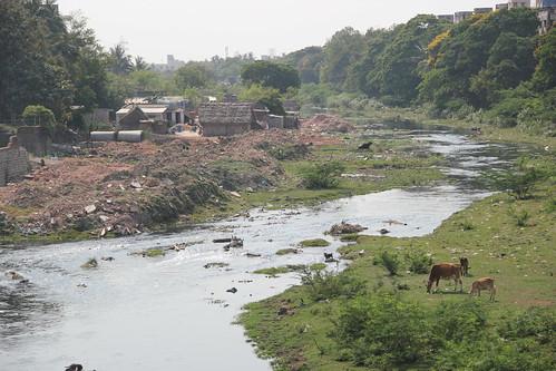 The river flowing through Arumbakkam