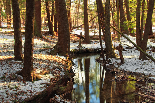 trees snow nature creek forest lowlight stream pennsylvania creativecommons coniferous hemlocks luzernecounty tsugacanadensis palustrine easternhemlocks nescopeckstatepark hemlockpalustrineforest