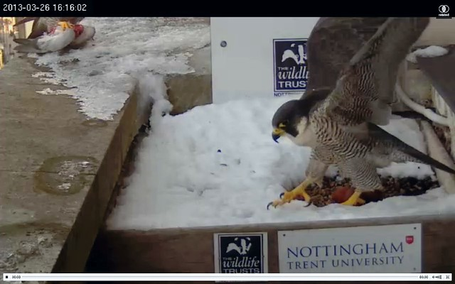 Food delivery and change of brooder 4.16pm 26/3/13