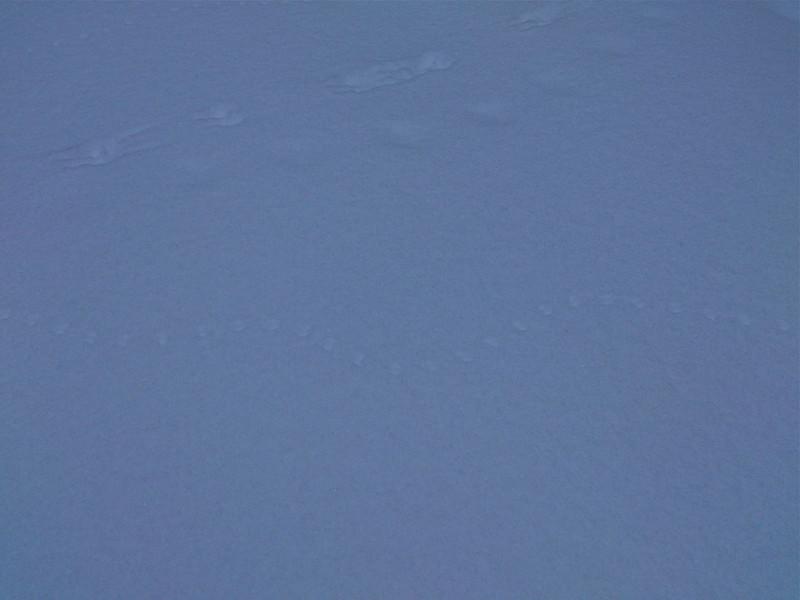 北國之冬(2012數小鳥任務)
