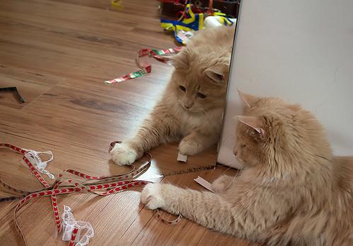 Amor i spegeln