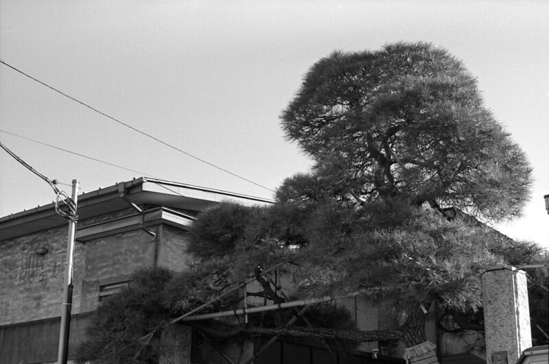 2013 0110 pentax lx rikenon xr 50mm f2 fuji neopan across 100 003