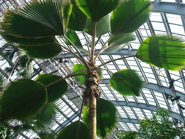 ferns-from-below