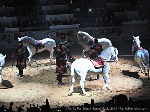 Andalusian Stallions at Medieval Times