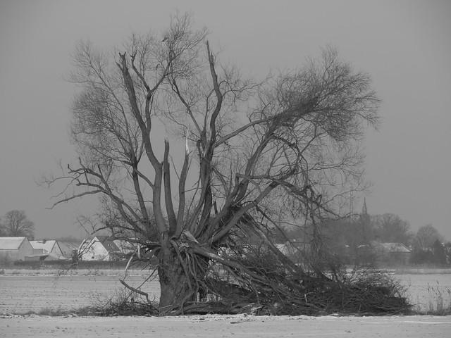 Baum, einsam auf weitem Feld