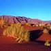 Luxury Train - Namibian Desert Express