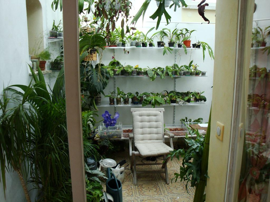 Dans mon Jardin d'Hiver 8430493538_9477422cf7_b