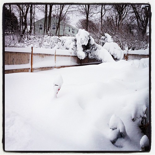 Side yard with drifts up to the top of the gate. #blizzard  #nemo