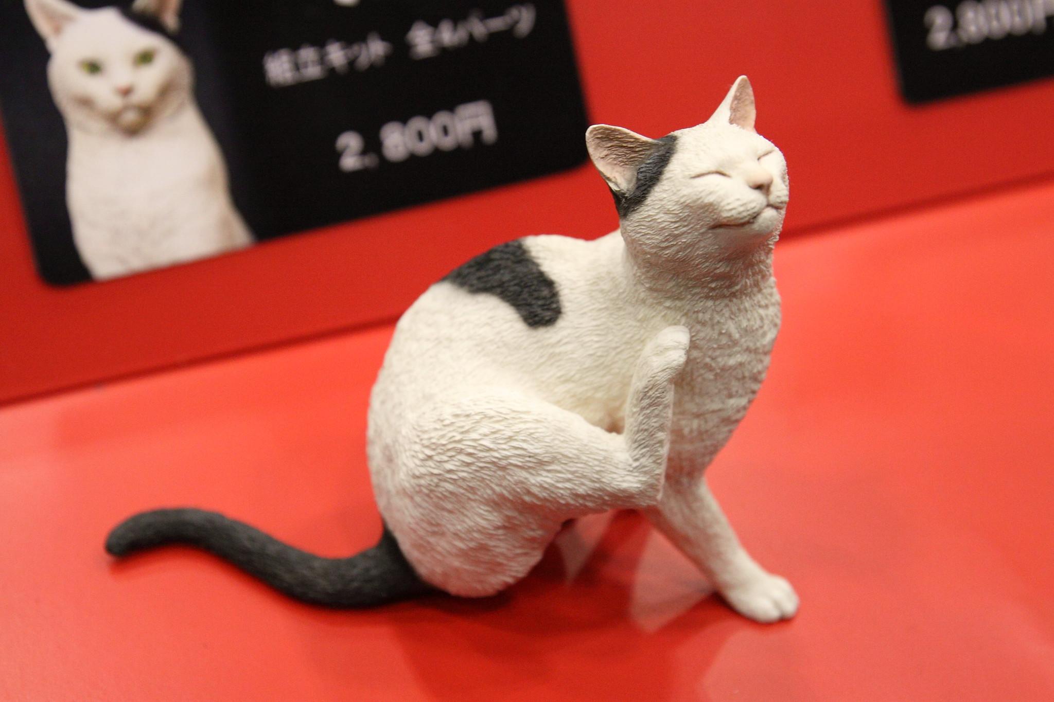 森口修の猫01