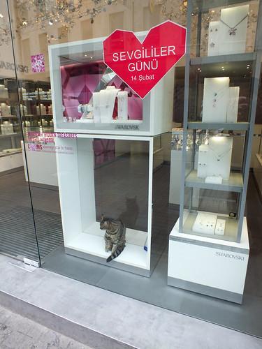 Bálint napra macska eladó