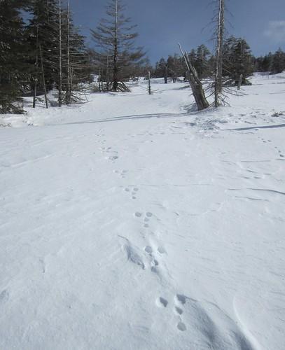 ウサギの足跡 2013年2月14日9:53 by Poran111